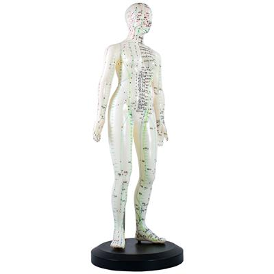 Model Human Body 48cm Female